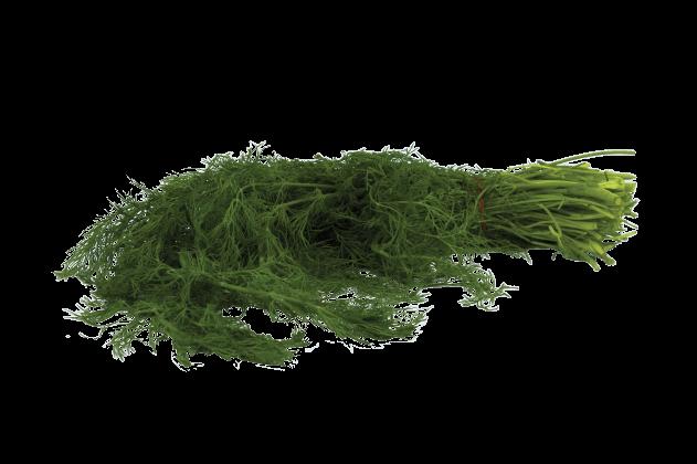 Organik Dereotu (1 demet)