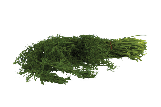 Organik Dereotu