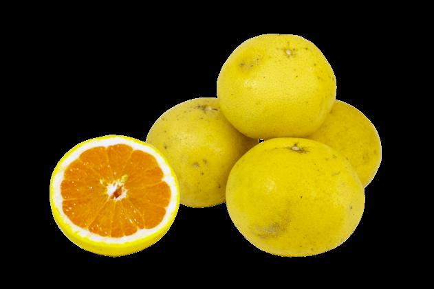 Greyfurt-Sarı (1kg)