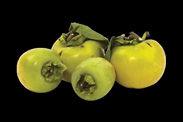 Kaki/Cennet Elması