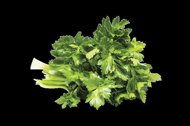 Organik Kereviz Yaprağı (1 demet)