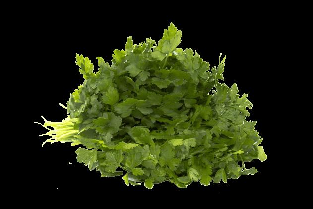 Organik Maydanoz