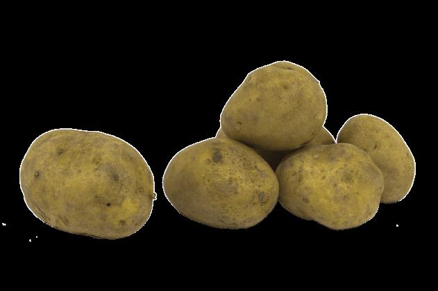 Organik Patates
