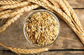 Yerli, hibrit ve GDO'lu tohum nedir?