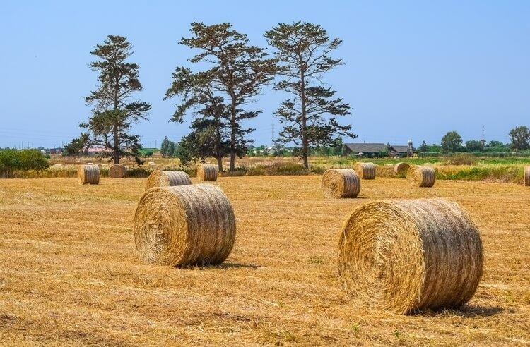 Hiçbir şey yapma tarımı: Fukuoka Çiftliği