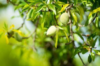İlkbahar meyve ve sebzeleri