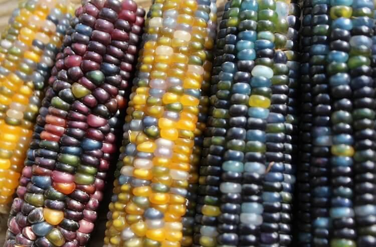 Sebze ve meyvelerdeki besin değeri değişimi