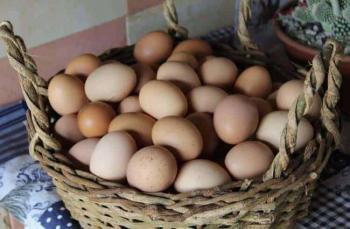 Yumurtada soğuk zincir gerekli mi?