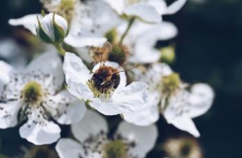 Arılar ve pestisitler: Arılar bizim için neden önemli?