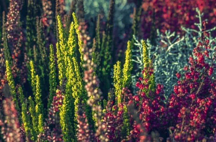Gıda üretiminde biyolojik çeşitliliğin önemi