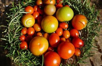 Domates, endüstri ürünü mü, lezzet mirası mı?