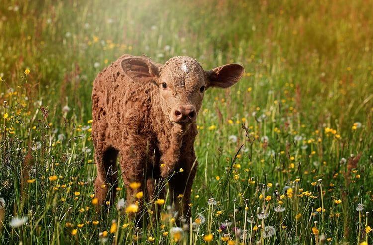 Çeşitlilik içeren sürdürülebilir tarım: Permakültür