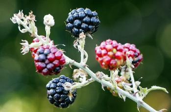 Hangi meyve, sebze hangi mevsimde yenir?