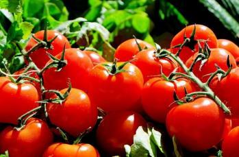 Bebeklerde domates tüketimi