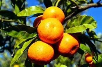 C vitaminiyle ilgili bilmemiz gerekenler
