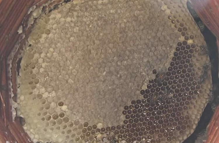 Karakovan balı nedir ve neden özeldir?