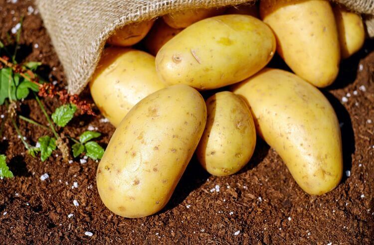 Patatesleri nasıl saklamalıyız?