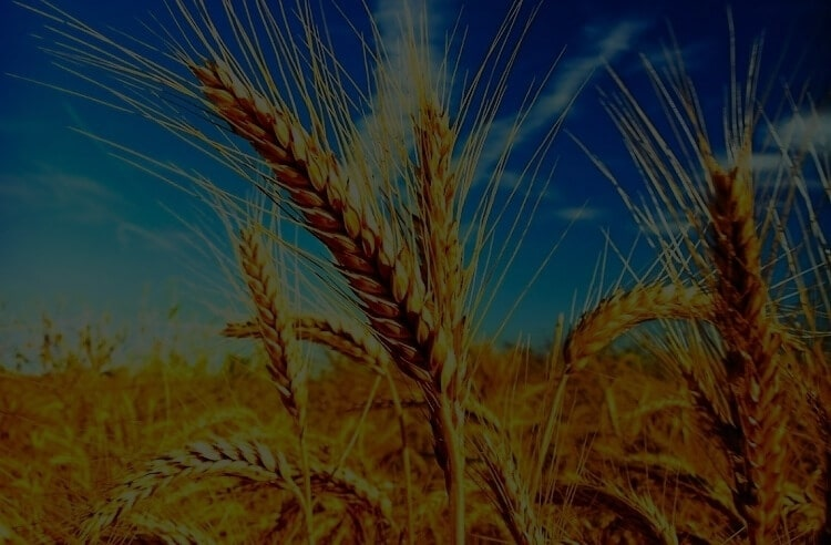 Buğdayımız doğal olsun!