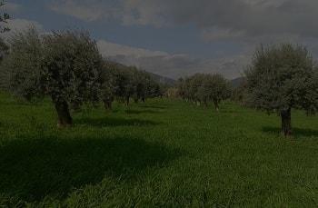 Doğru zeytinyağı nedir?