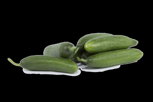 Organik Salatalık