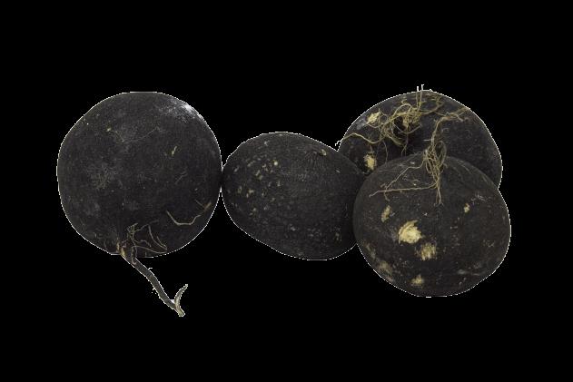 Organik Siyah Turp