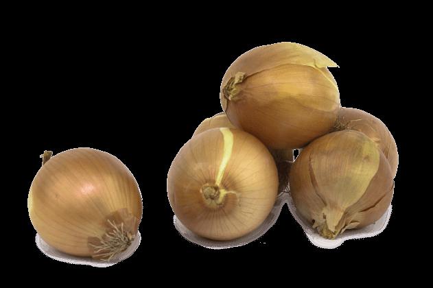 Organik Soğan