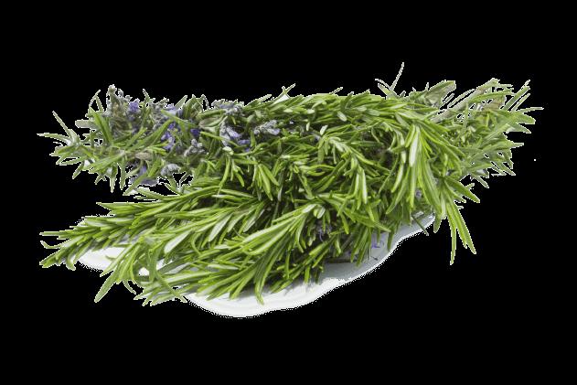 Organik Taze Biberiye (1 demet)