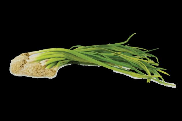 Organik Taze Sarımsak (1 demet)