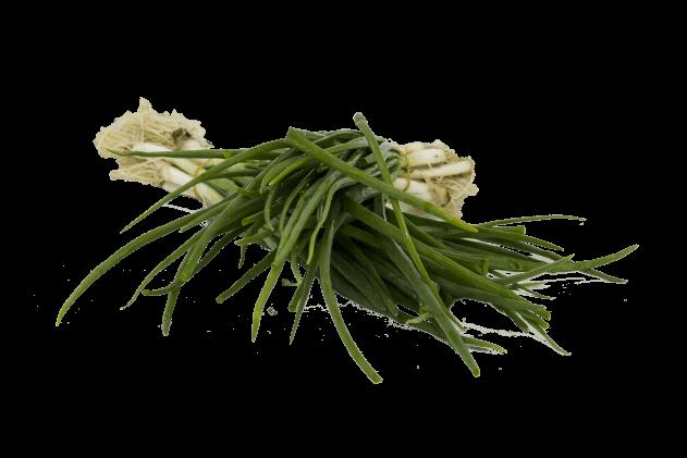 Organik Taze Soğan