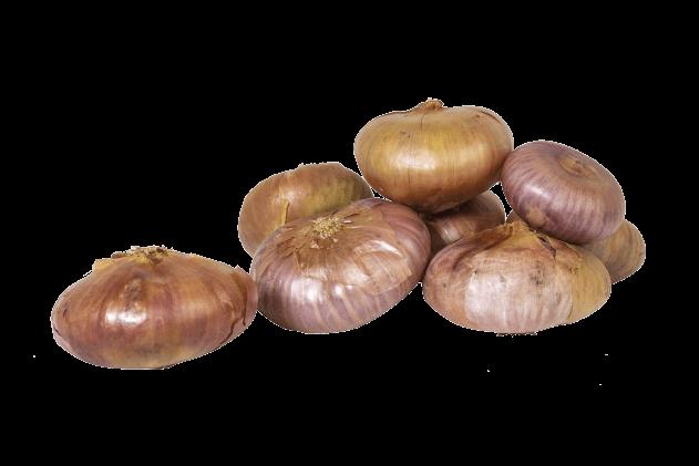 Organik Yassı Soğan